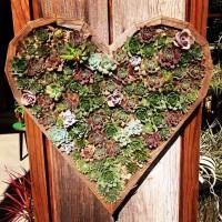 succulentheart