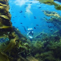 Underwater Parks Photo by Santa Barbara Channelkeeper