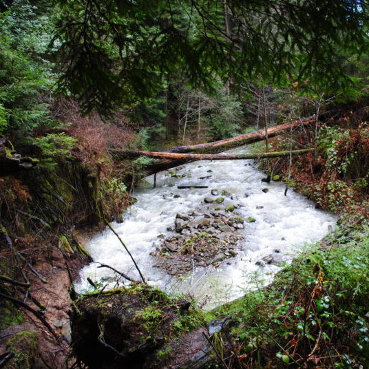 Redwood Creek Photo by Humboldt Baykeeper